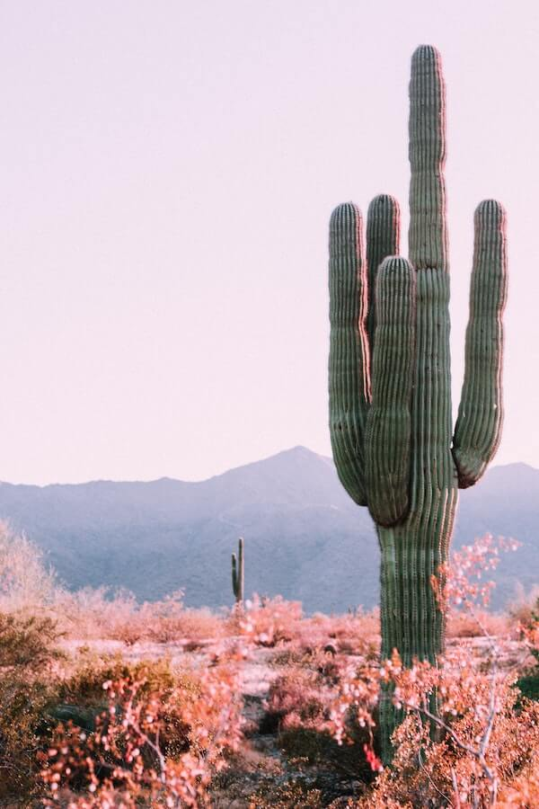Cactus near Bullhead City, AZ