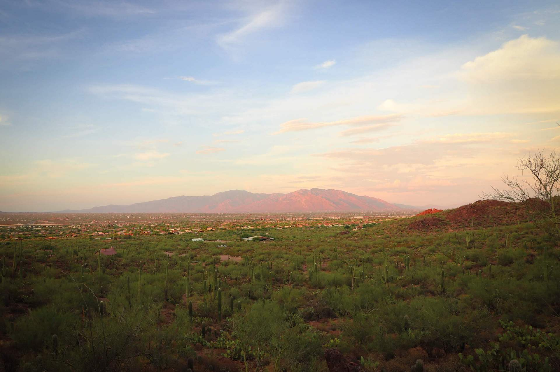 Mohave County Landscape